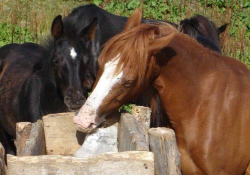 соль лизунец для коней лошадей
